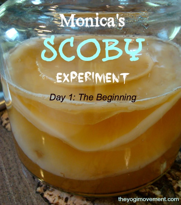 scoby experiment